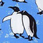 arthus-boy-provence-pengui-cocuk-deniz-sortu