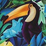 arthus-bird-of-paradise-deniz-sortu