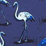 arthus-eclipse-flamingo-swim-short