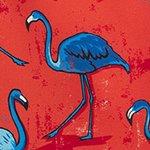 arthus-magenta-flamingo-swim-short