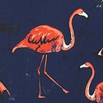 arthus-midnight-flamingo-swim-short